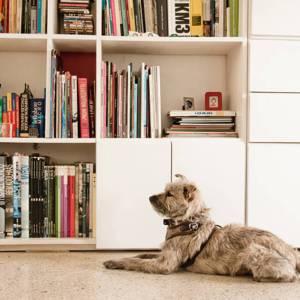 perro-apartamento-decoración