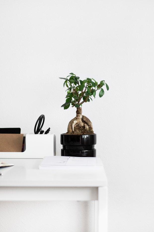 todo sobre minimalismo