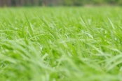 verde-ecología-bonos-verdes-naturaleza